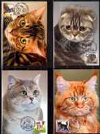 2017 Belarus / Weissrussland - Set Of 4 Maxicards - Kittens - Different Breeds Of Cats - Belarus