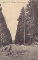 Foret De Nassogne, Chemin Des Reumont (pk58795) - Nassogne