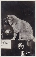 Kat, Cat, Chat Aan De Telefoon, Telephone (pk58797) - Katten