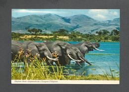 AFRICA - AFRIQUE - TROUPEAU D' ÉLÉPHANT - ELEPHANT HERD - TRÈS BEAUX TIMBRES -  PHOTO E. LUDWIG BY JOHN HINDE STUDIO - Cartes Postales