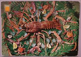 PLATOS TIPICOS - Llagosta Amb Variaciò - Catalunya - Lobster Aragosta Homard Vg - Recipes (cooking)