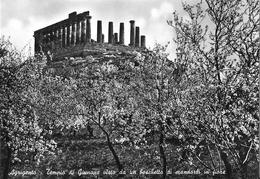 AGRIGENTO - Tempio Di Giunone Visto Da Un Boschetto Di Mandorli In Fiore - Agrigento