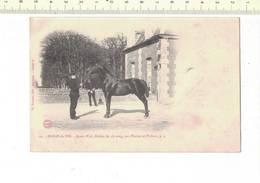 50339 -D5- HARAS DU PIN - JAMES WATT ETALON DE 1/2 SANG PAR PHAETON ET VICHNOU P S - Pferde