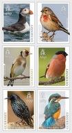 Guernsey - Postfris / MNH - Complete Set Europa, Vogels 2019 - Guernsey