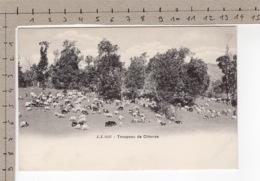 Troupeau De Chèvres - Chèvre / Ziege / Goat / Capra - Animaux & Faune