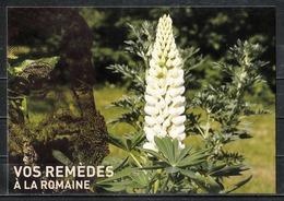 Musée Royal De Mariemont :Vos Remèdes à La Romaine. - Musées