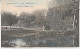 Asse - Assche - Vue Pittoresque De La Campagne De Walfergem - 1912 - Phototypie Marcovici Nr 11 - Asse