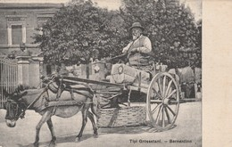 Grosseto - Tipi Grossetani - Bernardino - Grosseto