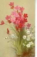 Jolie Illustrée  Signée E. VOUGA : Oeillets Des Chartreux - Flores