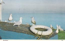 AM06 Animals Birds Gulls - Birds