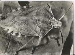 Grande Photo-Insecte -Pentatome Vert Hémiptère -en Gros Plan-Pub Transfusine-Médicament Laboratoire Médecine Publicité - Photographs