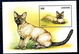 Hoja Bloque De Lesotho N ºYvert 131 ** GATOS CAT) - Lesotho (1966-...)