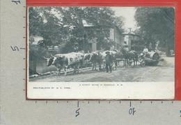 CARTOLINA VG STATI UNITI - U.S.A. - A Street Scene In HINSDALE - Published By M.S. Mann - 9 X 14 - ANN 1907 BRUNSWICK - Altri