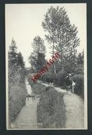 Comblain-la-Tour - Le Ruisseau De Boé. Bêtail. - Comblain-au-Pont