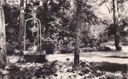 La Baule Les Pins (44) - Parc Des Dryades - France