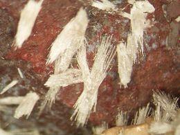 * BULTVONSTEINITE Xls & POLDERVAARDITE Xls, NChwaning II Mine, Kuruman, North Cape Province, South Africa * - Minerals