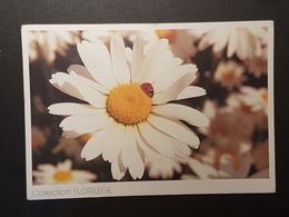Margeriten, Marienkäfer (gelaufen 2000, Frankreich); H24 - Blumen