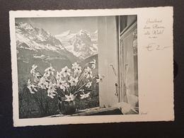 Narzissen, Hasliberg ( Gelaufen 1940); H24 - Blumen