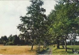 Harre-Saint-Antoine  Vakantiehuis - Manhay