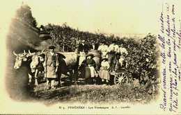 65....hautes Pyrenées....les Vendanges...attelage. - Francia