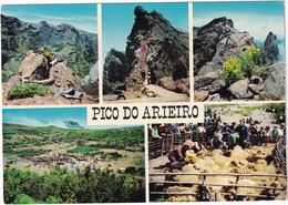 Pico Do Arieiro - 1810 M - Tosquias / Sheep-shearing / La Tondaison - (Madeira) - Madeira