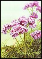 UKRAINE. MEDICAL AND MELLIFEROUS PLANTS. Valeriana Officinalis L. GRASSHOPPER. Unused Postcard, 2018 UkrPost Issue - Heilpflanzen