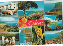 Madeira - As Melhores Vistas De Madeira - Madeira