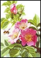 UKRAINE. MEDICAL AND MELLIFEROUS PLANTS. Rosa Canina L. HONEYBEE. Unused Postcard, 2018 UkrPost Issue - Heilpflanzen
