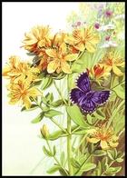 UKRAINE. MEDICAL AND MELLIFEROUS PLANTS. Hypericum Maculatum Crantz. BUTTERFLY. Unused Postcard, 2018 UkrPost Issue - Heilpflanzen