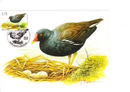 Buzin - Poule D'eau - 1985-.. Oiseaux (Buzin)