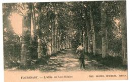 FOUESNANT L ALLEE DE LOC HILAIRE ANIMEE - Fouesnant