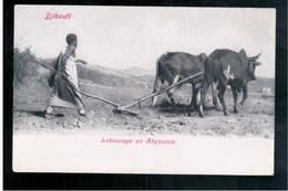 DJIBOUTI Labourage En Abyssinie Ca 1905 OLD  POSTCARD - Gibuti