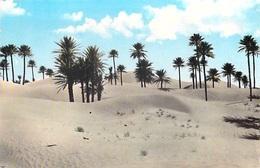 Algérie > COLOMB  BECHAR (Saoura)  Les Dunes De Colomb Béchar (- Editions JASEBER  N°1007 PRIX FIXE - Bechar (Colomb Béchar)