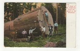 "CALIFORNIA, USA, Giant Log & Lumber Jacks, ""Adm' Dewey "", 1909 Weidner Postcard - Etats-Unis"