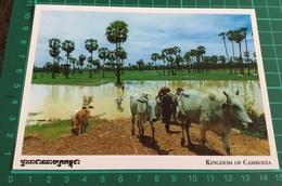 Kingdom Of Cambodia ~ Khmer Farmer ~ Buffalo - Cambodia