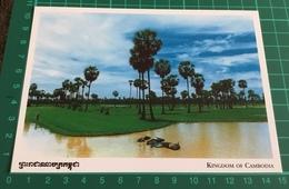 Kingdom Of Cambodia ~ Cambodia Country Side ~ Buffaloes - Cambodia