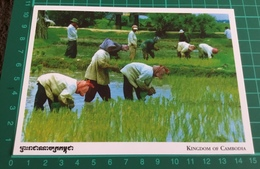 Kingdom Of Cambodia ~ Khmer Farmer - Cambodia