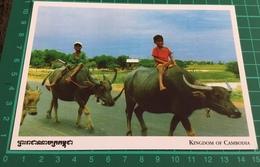 Kingdom Of Cambodia ~ Buffalo Boy - Cambodia