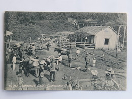 C. P. A. : Guatemala : Cargando Café , En 1908 - Guatemala