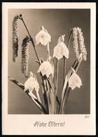 C4595 - Groh Foto Ansichtskarte - Blumen - Frühlingsknotenblume - München - Blumen