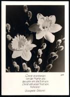 C4598 - Groh Foto Spruchkarte - Blumen  - München - Blumen