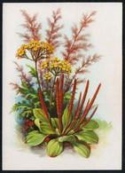 C4607 - Stöckel Verlag Ansichtskarte - Blumen - Stöckelbildkarte Hannover - Blumen