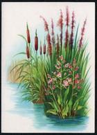 C4608 - Stöckel Verlag Ansichtskarte - Blumen - Stöckelbildkarte Hannover - Blumen