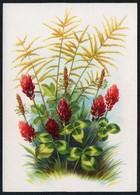 C4609 - Stöckel Verlag Ansichtskarte - Blumen - Stöckelbildkarte Hannover - Blumen