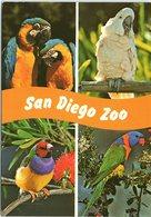 Animals - Multi View, Birds Of San Diego Zoo, Macaw, Cockatoo, Finch, Lorikeet - Oiseaux