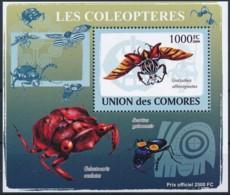 NB - [38426]Comores 2009 - BL1428, Faune, Insectes, Coléoptères, Goliathus Albosignatus. - Insectes