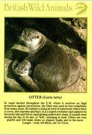Animals - Otter, British Wild Animals - Animals