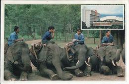 Working Elephants Chiant Mai - Thailand