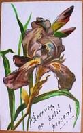 Cpa  FLEURS , IRIS POURPRE , Paillettes Dorées , Précurseur , FLOWERS PURPLE IRISES EARLY PC - Flowers