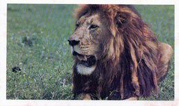3900 - LION SAFARI PRISUNIC - Lions